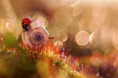 Graphic-ExchanGE - a selection of graphic projects #ladybug #wildlife #photography #bokeh