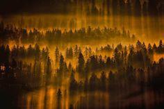 Foggy Landscapes of Slovenian Forests by Filip Eremita