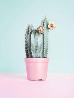 Gepinntes Bild #flower #cactus