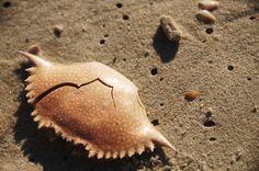 Shell #nature #beach #shell #crab