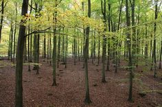 john grade: la chasse #forest #installation
