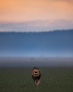 Wildlife Action Photography by Varun Aditya