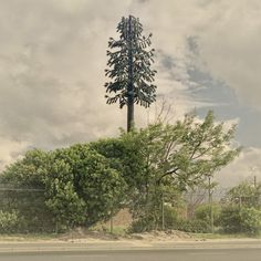 Cell phone towers disguised as trees by South African artist Dillon Marsh #art #tree #tower