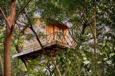 Peek-a-boo : Lost In Tranquility, 'vaan' At Rajkot, Gujarat, India (ar. Kamlesh Parekh) #treehouse