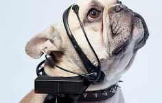 What is your dog thinking about? With this device, you can understand what your dog wants. #product #industrial #design