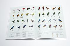 Deyrolle magazine on Behance #birds #design #graphic #editorial