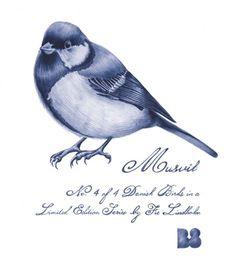 Musvit_blaa.png 660×739 pixels #musvit #fie #danish #lindholm #bird #birds