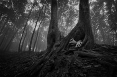 The Romanian Forests - Wall to Watch #forest #tree #hands #trunk #roots #grave #escape