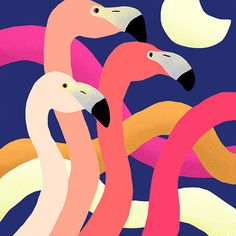 Flamingo #illustration #colors