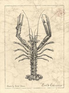 Biomechanical Pencil Drawings of Crustaceans by Steeven Salvat