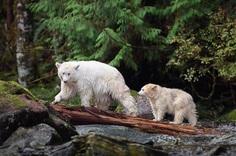 Unforgettable Portraits of Wild Animals by Melissa Groo