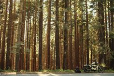 tumblr_mqcvxvFoAv1qb44y1o1_500 #forest #travel #motorcycle