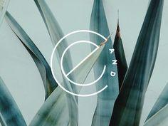 Cadence & Eli | Mark Concept by Breanna Rose