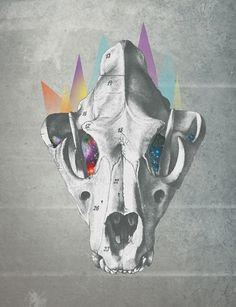 david▲fallow on the Behance Network #geometria #geometry #esqueleto #fallow #skull #david