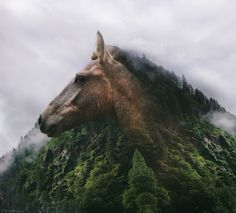 Like a rock! #horse #mountains #doubleexpossure #riazhassan