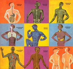 The Human Body: What It Is and How It Works, in Vibrant Vintage Illustrations circa 1959 | Brain Pickings #illustration #vintage #retro #ana