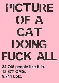FFFFOUND! #lol #catz