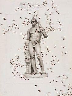 #man #ants