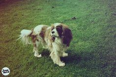 Joseph R Marritt #dog