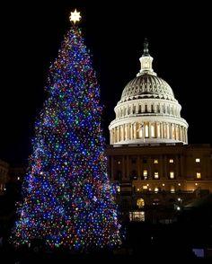 8 Christmas art tree in Cpitol Washington DC