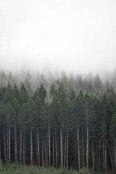 forrest #fog #forrest #earth #photography #nature