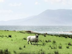 South West Ireland by Claire Droppert