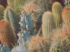 cactus #cactus