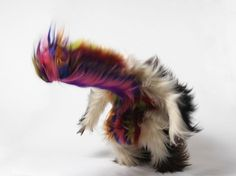 Nick Cave :: JACK SHAINMAN GALLERY #nick #photo #motion #cave #fur #puppet #photography #sound #suit