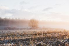 wonderland | Flickr - Dmitri Shushuyev #estonia #early #landscape #photography #morning