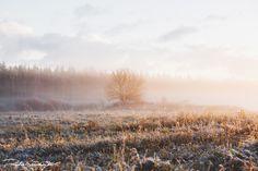 wonderland | Flickr - Dmitri Shushuyev