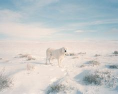 across the country #photography #snow #dog