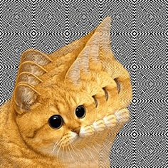 Cakehead Loves Evil | Page 2 #trippy #cat #animated #gif