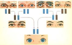 All sizes | eyes | Flickr - Photo Sharing! #genetics #1960s #vintage #illustration