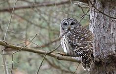 Surprise Owl