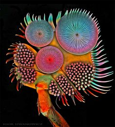 Mindblowing Macro Photography of Insect Appendages by Igor Siwanowicz