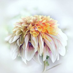 Stunning Macro Flowers Photography by Pia Lee