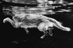 Dog Photographer of the Year 2018 – in pictures   Life and style   The Guardian
