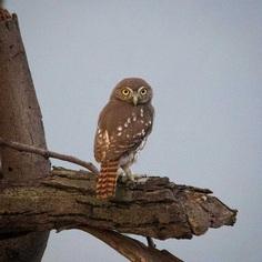 #bestbirds: Beautiful Bird Photography by Alejandra Perez