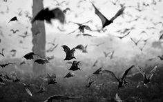 Tumblr #bats