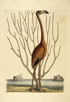 Have a Nice Day #illustration #animal #bird