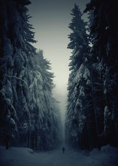 Keep Walking. #fog #photography #men #blue #forest #trees #winter