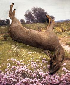 Diana Scherer Still-life #deer #photography #scherer #diana