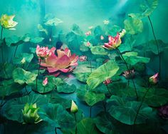 Photography by Jee Young Lee