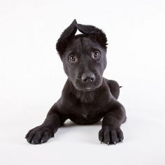 Animal Shelter Portraits - Wall to Watch #shelter #puppy #photography #animal #dog