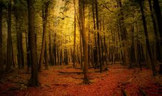 Forest Landscape Autumn Free Hd Wallpapers – WallpapersBae