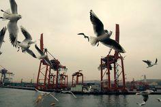 Bienvenue en Château-vacant #photography #seagulls