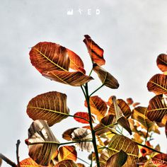 Dramatic Nature #gallery #tree #leaf #infected #nature #photography #hdr