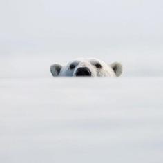 Photographer Audun Lie Dahl Captures Stunning Arctic Wildlife
