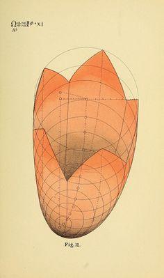 B. W. Betts' Geometrical Psychology | The Public Domain Review