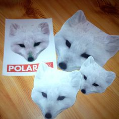 I made some Polarfox stickers! http://www.polarfox.com #creative #fox #streetart #design #head #art #polarfox #futura #diy #sticker
